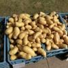 potatoes-377531_1280