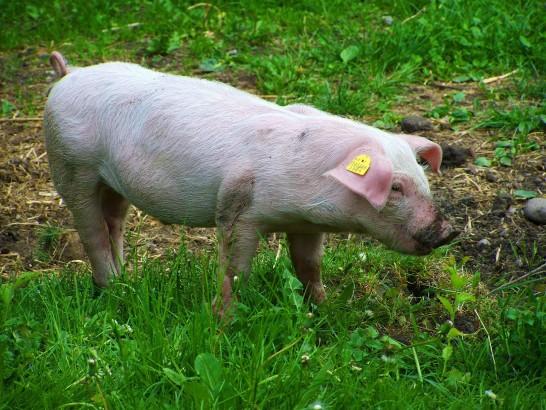 今年のふるさと納税も石岡市の弓豚に決まり!ボリューム満載の豚肉が我が家に届いたよ。